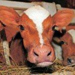 Работаем с ДПП «Зорька» или все ли коровы мычат?